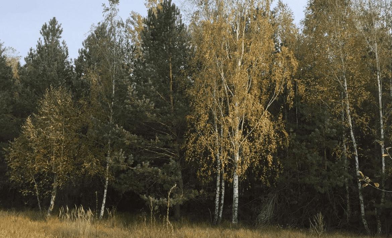 Продажа земельного участка 2,05 га в 30 минутах от Киева Агентство Недвижимости Киев. Продать, купить недвижимость, квартиру, дом 5 1170x709