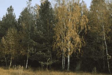 Продажа земельного участка 2,05 га в 30 минутах от Киева Агентство Недвижимости Киев. Продать, купить недвижимость, квартиру, дом 5 385x258