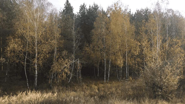 Продажа земельного участка 2,05 га в 30 минутах от Киева Агентство Недвижимости Киев. Продать, купить недвижимость, квартиру, дом 6 1170x659